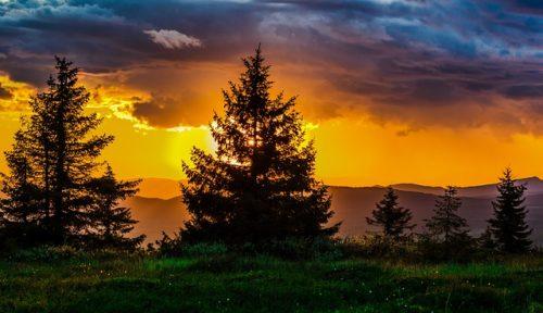 大木と夕暮れ