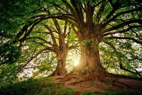 大木と日の光