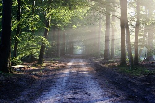 太陽光が差し込む森の道の画像