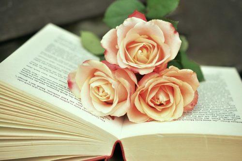 本の上のピンクのバラ三本の写真