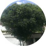 樹樹のプロフィール画像