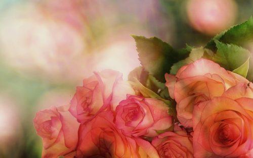 ロマンチックなバラの写真