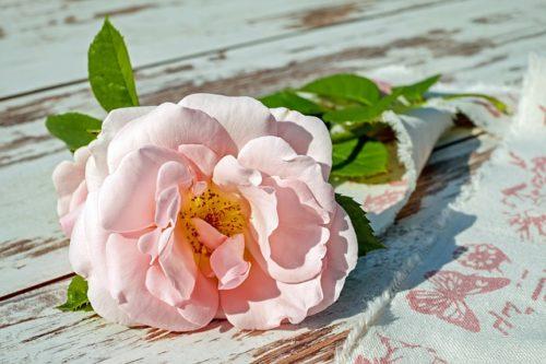 一本だけ置かれたバラの写真