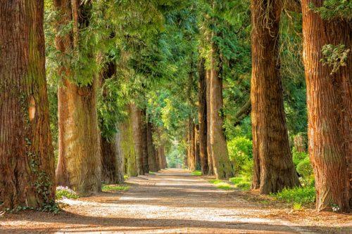 明るい並木道の画像