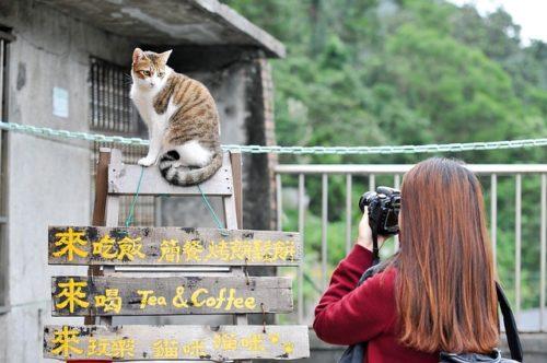 看板の上に座る猫の写真を撮る人