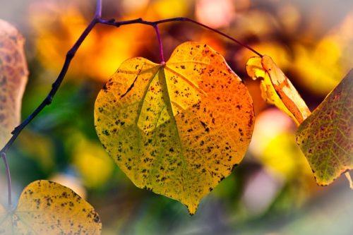 黄色く紅葉した木の葉の画像