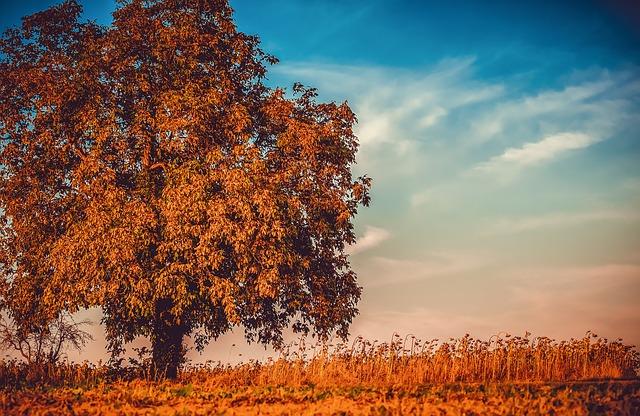 草原に紅葉した木が立っている画像