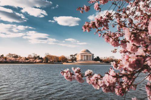 桜の奥に湖と建物が写っている画像