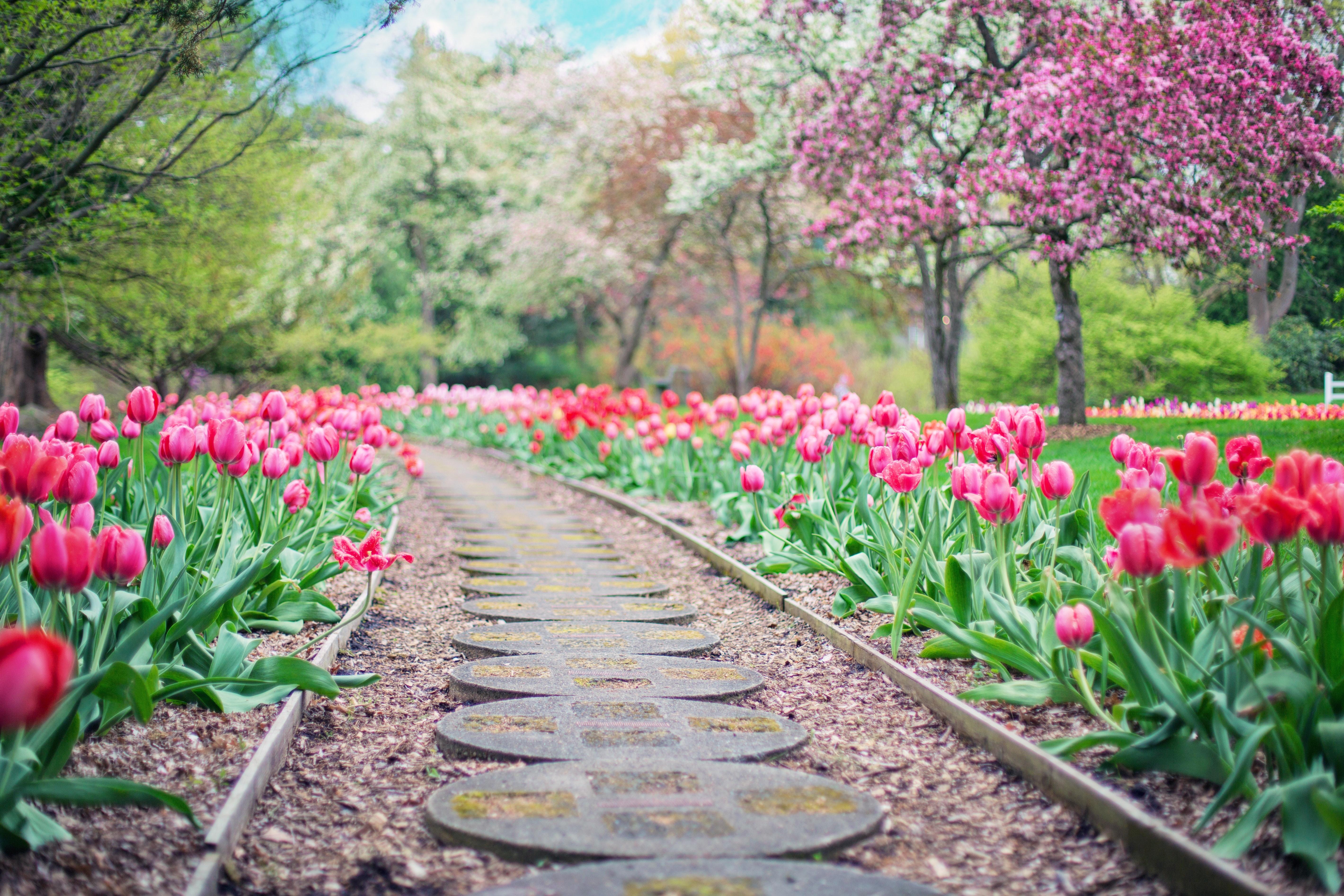 花咲く散歩道の画像