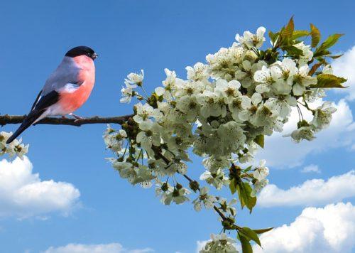 白い花びらの桜の木に鳥がとまっている様子